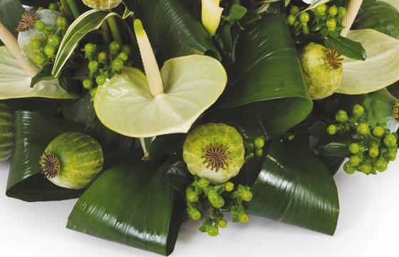 image d'un anthurium vert de la composition l'instant
