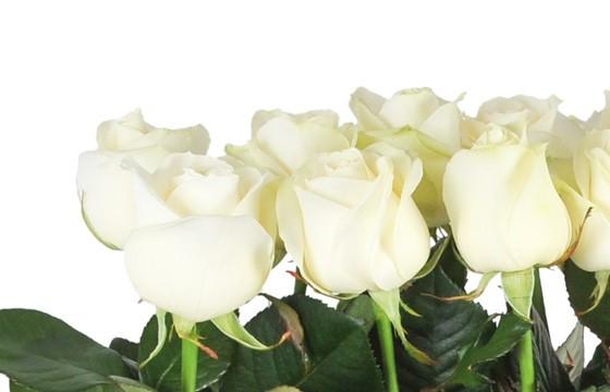 vue des roses de couleurs blanches de la raquette de deuil Angélus