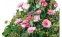 vue sur le bas de la composition de fleurs Pensées