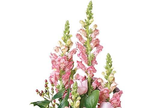 Vue sur les mufliers de couleur rose de la composition florale