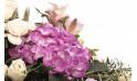 vue sur un hortensia parme de la raquette de fleurs Affection