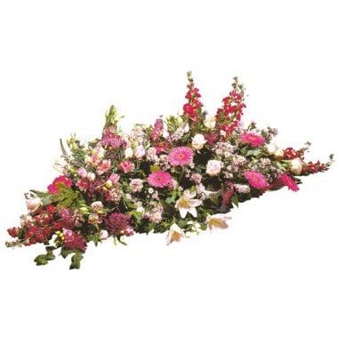 image de la raquette de fleurs fuchsia du nom de Paisible