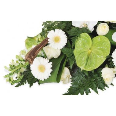 zoom sur des gerberas blancs et un anthurium vert