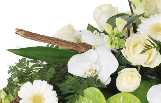 zoom sur un fleuron d'orchidée phalaenopsis blanc