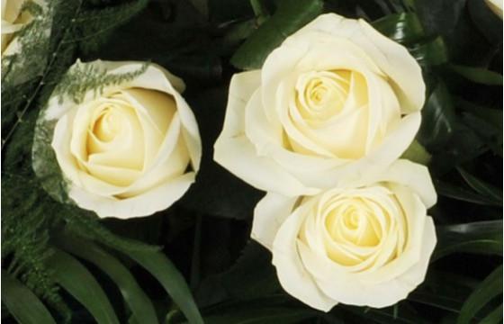 vue sur trois roses blanches de la raquette L'Ange Gardien