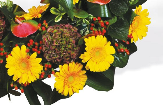 Vue sur des gerberas jaunes et des hortensia vert-pourpre