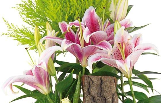 vue sur les lys roses de la coupe de plantes Symphonie
