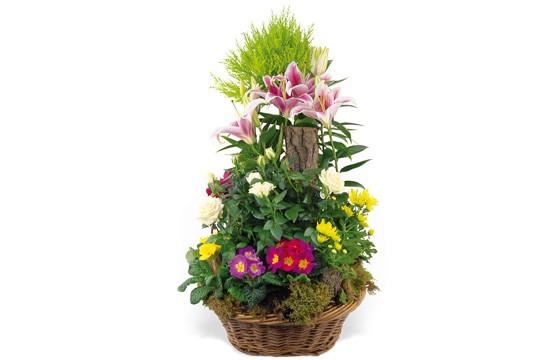image de la coupe de plantes symphonie