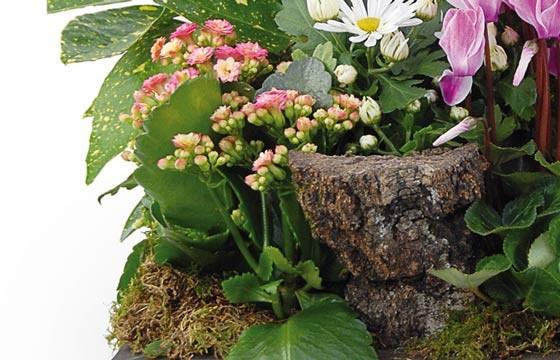 L'Agitateur Floral |vue sur le bas de la composition de plantes Infini