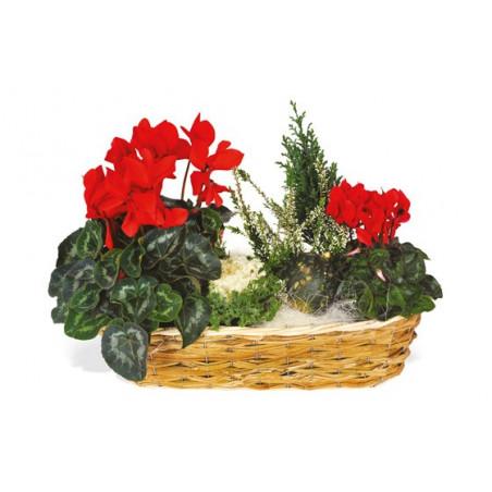 image de la composition de plantes vertes & fleurie Etincelle
