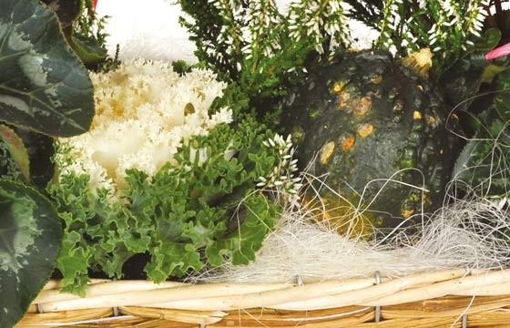 L'Agitateur Floral |vue sur les décorations de la composition de plantes Étincelle
