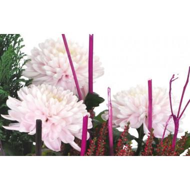 L'Agitateur Floral |vue sur des chrysanthèmes roses