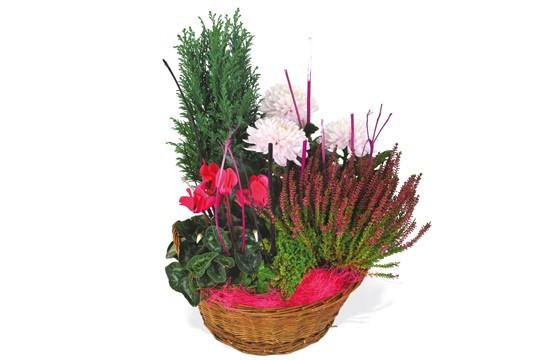 L'Agitateur Floral |image de la composition de plantes rouge et rose Le Jardin des Anges