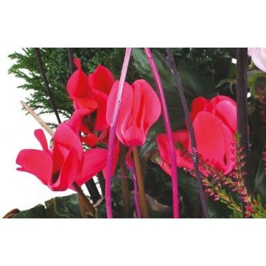 L'Agitateur Floral |vue sur des cyclamens rouge