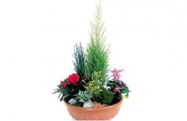 L'Agitateur Floral |image de la coupe de plantes fuchsia & rouge Jardin d'Eden