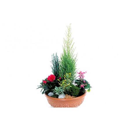 image de la coupe de plantes fuchsia & rouge Jardin d'Eden