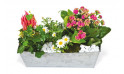 L'Agitateur Floral |image de la lardinière de plantes roses & blanches Calypso