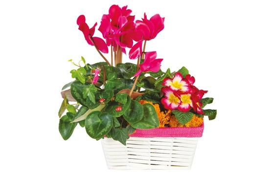 L'Agitateur Floral |image de la Composition de deuil rose-fuchsia Voyage Eternel