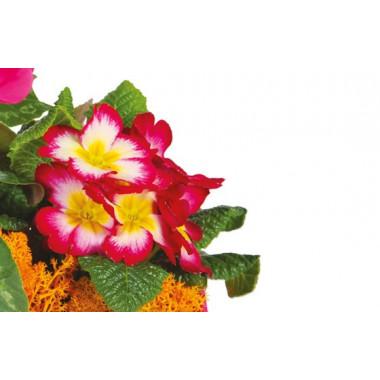 L'Agitateur Floral |vue sur des primevères de la Composition de deuil rose-fuchsia Voyage Eternel