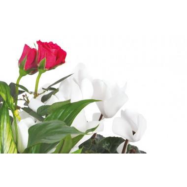 L'Agitateur Floral |vue sur un rosier rouge et un cyclamen blanc de la Composition de deuil blanche, rose, fuchsia Souvenir