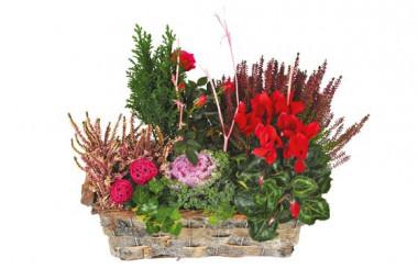 L'Agitateur Floral |image de la Coupe de plantes vertes & rouges Morphée