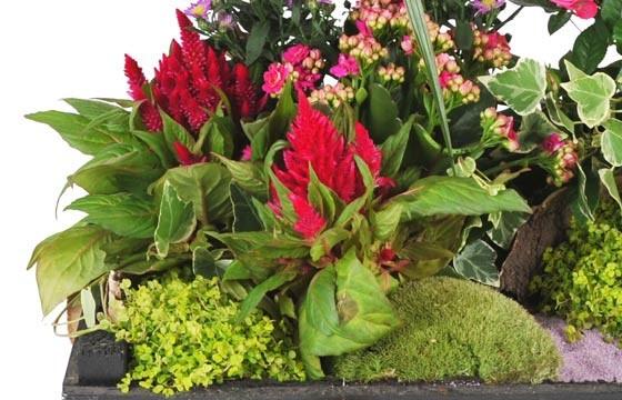 L'Agitateur Floral |vue sur un ensemble floral de la Composition de plantes de deuil Le Jardin d'Olympe