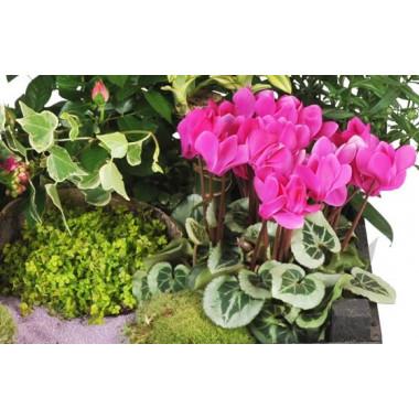L'Agitateur Floral |vue sur un kalenkoé de la Composition de plantes de deuil Le Jardin d'Olympe