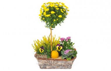 L'Agitateur Floral |image de la Composition de deuil jaunes & mauve L'Oasis