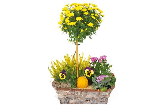 image de la Composition de deuil jaunes & mauve L'Oasis