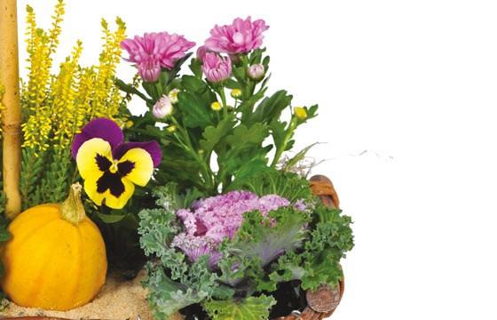 L'Agitateur Floral |vue sur un ensemble floral de la Composition de deuil jaunes & mauve L'Oasis