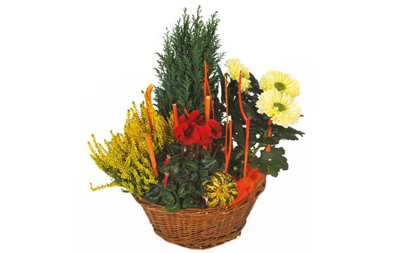 image de la Composition de deuil rouge & jaune Jardin d'Hiver