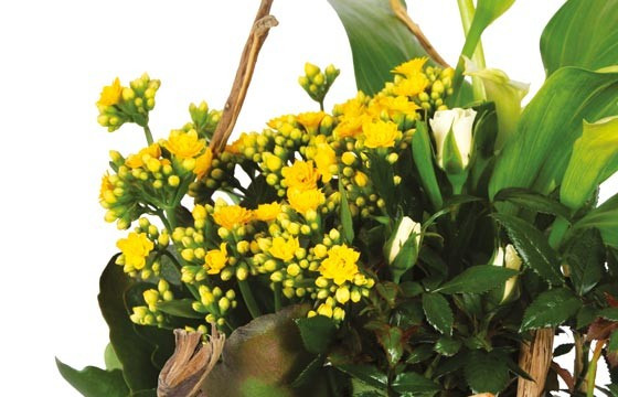 L'Agitateur Floral |L'Agitateur Floral |vue sur un kalanchoé jaune de la Composition de deuil jaune & blanche Intensité