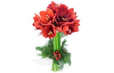 image du Bouquet d'Amaryllis L'enchanteur