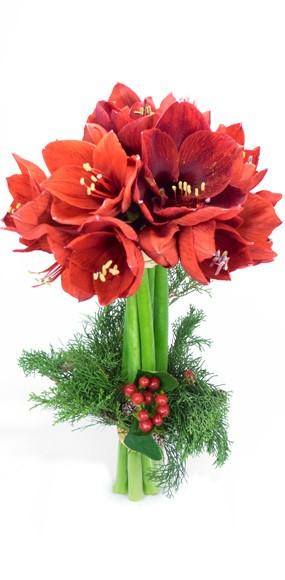 Bouquet d 39 amaryllis rouges livraison de fleurs pour no l for Amaryllis en bouquet