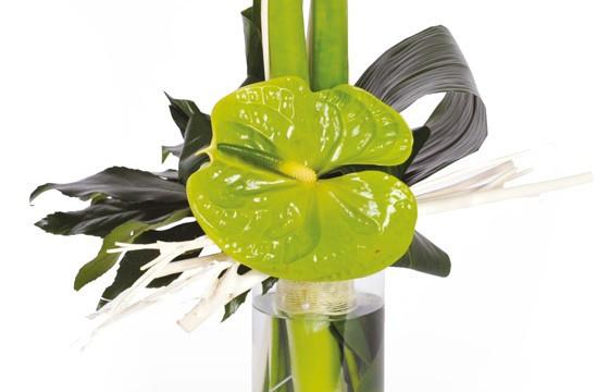 zoom sur l'anthurium du Bouquet d'amaryllis Un Hiver à Paris
