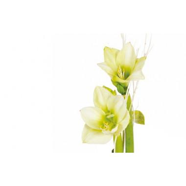 zoom sur les têtes d'amaryllis blanche verte du Bouquet d'amaryllis Un Hiver à Paris