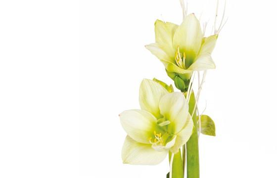 Bouquet d 39 amaryllis un hiver paris des fleurs presque for Amaryllis en bouquet