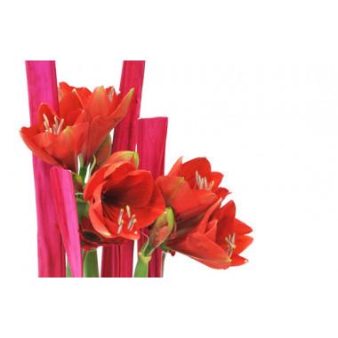 L'Agitateur Floral |zoom sur les têtes d'amaryllis de la Composition florale Tonique