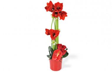 image de la Composition de fleurs rouges Fidji