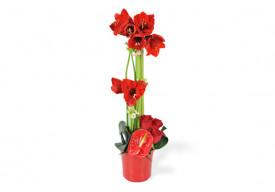 Composition de fleurs rouges Fidji