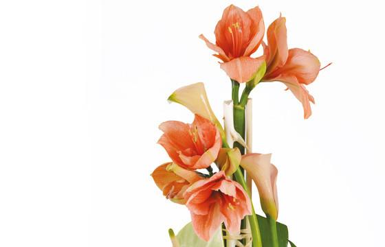 zoom sur les amaryllis orange de la Composition de fleurs Alchimie