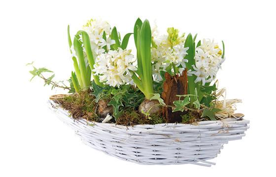 image de la coupe de Jacinthes blanches Noce blanche