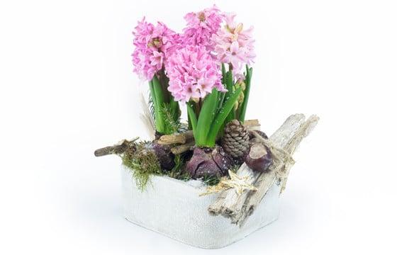 L'Agitateur Floral |image de la magnifique coupe de saison de jacinthe rose
