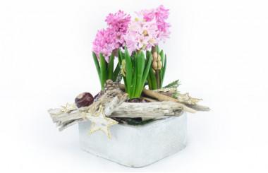image de la Coupe de plantes de saison Rose Jacinthe
