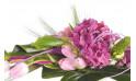 zoom sur un hortensia rose du Bouquet de fleurs Envol