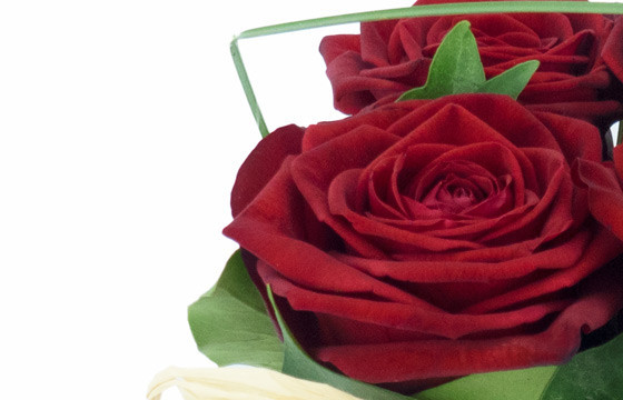 zoom sur une rose rouge de la Composition de roses rouges Pot d'Amour