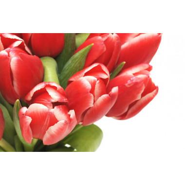 zoom sur de très belles tulipes rouges du Bouquet de Perle Douce