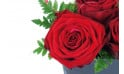 zoom sur une rose rouge du Composition de roses rouges Cupidon