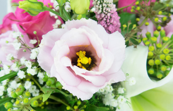 macro sur un lisianthus du Bouquet rond de fleurs Lily Rose