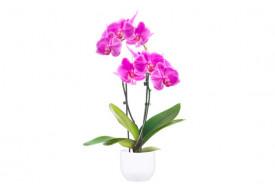 Orchidée Double Branche Rose Mauve